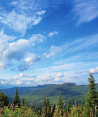 Boreal forest landscape — Stock Photo