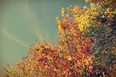 Fall colors and sky-instagram — Stock Photo