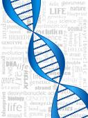 DNA strand — Stock Vector