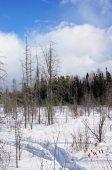 Frozen bog — Stock Photo