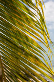 Palm Frond on Ocean — Stock Photo