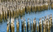 Blue Water Through Old Wood Pilings — Stock Photo