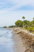Seawall and Palm Tree on Beach — Stock Photo