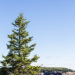 Fir Tree on Blue Water — Stock Photo #63731121