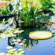 Large and Small Lilly Pads — Stock Photo #65980641