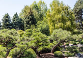 Pines and Weeping Willows in Park — Stock Photo