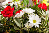 White Daisies with Red Roses — Stock Photo