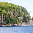 Evergreen Trees on Steep Rocky Coast — Stock Photo #70787487