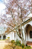 Tree by Arches in Church Courtyard — Stock Photo