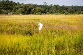 Egret Flying Low Across Grass — Stock Photo