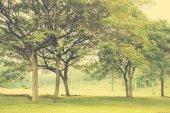 Vintage green  park — Stock Photo