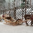 Reindeers in harness — Stock Photo #63413723