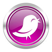 Twitter violet icon  — Stock Photo