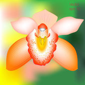 Orange orchid flower — Stock Vector