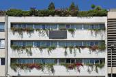 Costruzione del giardino verticale — Foto Stock