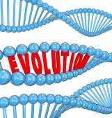 Evolution Word Letters DNA Strand Family Ancestors Genes — Zdjęcie stockowe