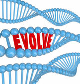 Evolve DNA Word — Stock Photo