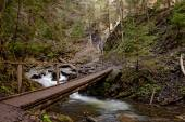 Bridge in Carpathian mountain forest — Stock Photo