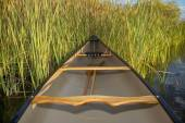 Canoe and cattails — Foto Stock
