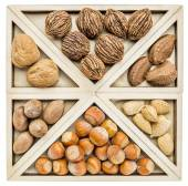 Variety of nuts in shells — Stock Photo