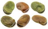 Fava (broad) bean isolated — Foto de Stock