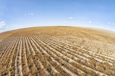 Plowed field in fish eye perspective — Stock Photo