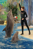 Instructor performs with dolphins — Стоковое фото