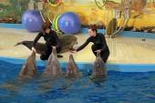 Instructors performs with dolphins — Стоковое фото