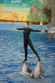 Instructor with marine mammals — Stock Photo