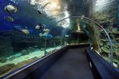Discovery World Aquarium — Stock Photo