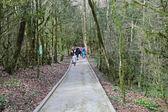 Yew-tree grove in Caucasian biosphere — Stock Photo