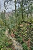 Yew-tree grove in Caucasian biosphere reserve — Stock Photo