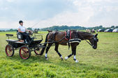 Horse Carriage Competition — Stock Photo