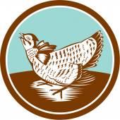 Prairie Chicken Retro Circle — Stock Vector