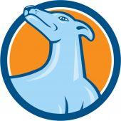 Greyhound Dog Head Looking Up Cartoon — Stock Vector