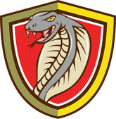 Cobra Viper Snake Head Attacking Shield Cartoon — Stock Vector