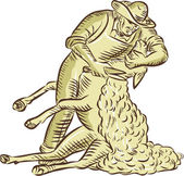 Farmworker Shearing Sheep Etching — Stock Vector
