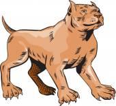 Pitbull Dog Mongrel Standing Etching — Stock vektor