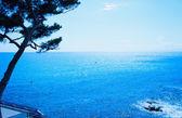 Sea and tree — Stock Photo