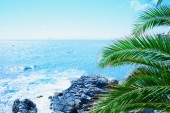 Sea with palm — Stock Photo