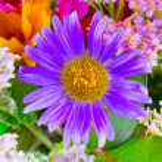 Purple daisy — Stock Photo #54244471