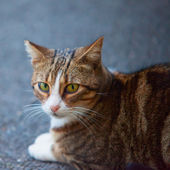 A cat — Stock Photo