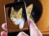 Pet photography — Stock Photo