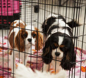 Dogs in a cage — Stock Photo