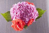 Geranium and roses — Stock Photo