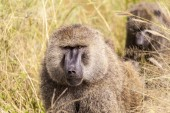 Monkey In The Wilderness — Stock Photo