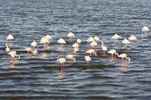 Różowe flamingi — Zdjęcie stockowe
