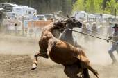 Rodeo  Braking in — Stock Photo