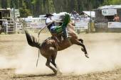 Rodeo   Bronco Riders — Stock Photo