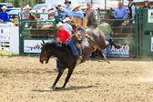 Rodeo   Bronco Riders — Stock Photo